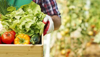 agroalimentare-italia