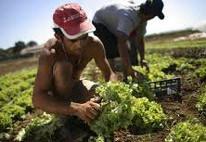 Immigrati e lavoro