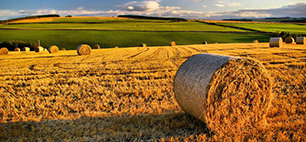 agricoltura lombardia giovani